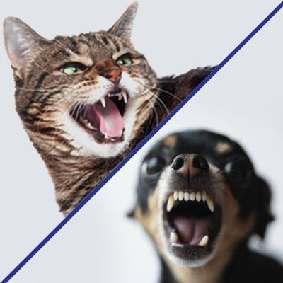 Another Approach Animal Behavior Services